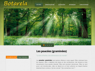 Les Graminées, identification et description