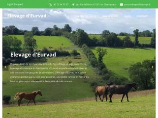 Elevage de chevaux, pension de poulinières, entrainement de trotteurs en Basse Normandie