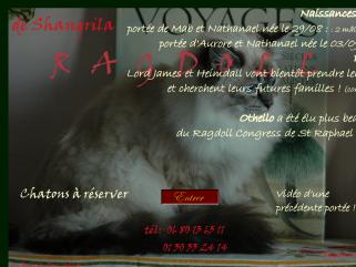 Le chat Ragdoll de prestige en France (78)